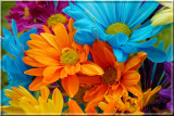Carnations16.JPG