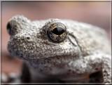 Treefrog89.jpg
