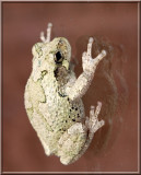 Treefrog209.jpg