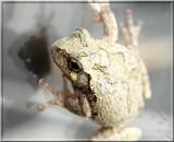 Treefrog211.jpg