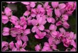 Tundra flower