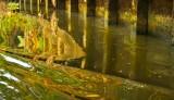 Klong Reflections. BKK