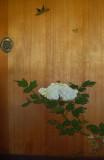Stevenson house wht flower.jpg