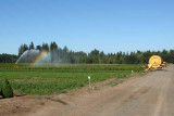 Irrigation Rainbow