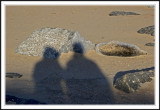 Shadowplay with the seals!