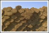 Reed bundles!
