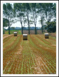 The bales.
