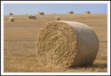 Fields of Bales!