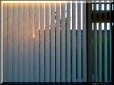 Morningsun peeping through 21 slats of the blinds
