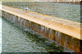 5 november: Seagull on cascade