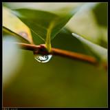 21 november: Drip