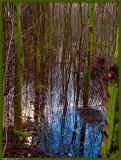 10 december: Swamp