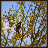 april 9th: Visitor