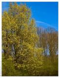 april 11th: Spring Yellow