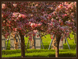 april 15th: Blooming