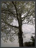 april 21st: Birch Light