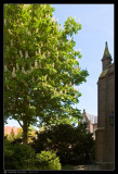 april 26th: Chestnut in Oudewater