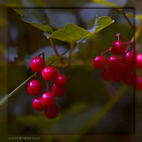 30th: Fall Berries