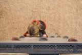 Girl on wall 5.jpg