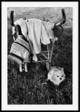 Le chien peureux ouLe gardien de poussette