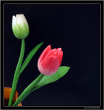 Tulips in wood