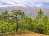 La Cumbrecita Pines