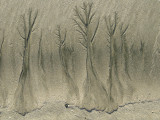 More Sand Trees