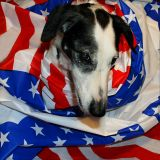 Joop's Dog Log - Monday Nov 01, 2004