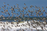 Birds -- Monterey Bay, February 2005
