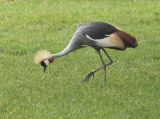 Birds -- Zoo Captive Exotics