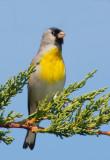 Birds -- Monterey Bay, March 2007
