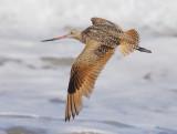 Birds -- Monterey Bay, July 2007