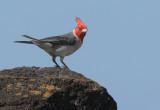 Birds -- Hawaii