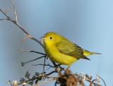 Birds -- Palo Alto Baylands songbirds, Fall 2007
