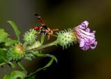 The Pollenator -- I'll Be Baaack