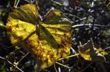 a crisp fall day