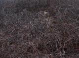 Wheres Bambi? 41