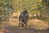 elephant ride 3.jpg