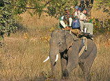 elephant ride 5.jpg