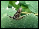 P1160715 Insekt.jpg