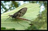 P1160731 Insekt.jpg