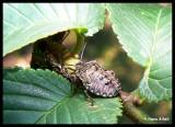 P1160787 Insekt.jpg