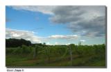 Vignoble près de St-Eustache