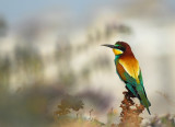 Bee Eaters 2