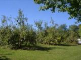 orchard0710110016.JPG