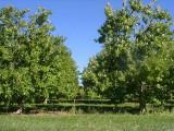 orchard0710110023.JPG
