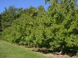 orchard0710110025.JPG
