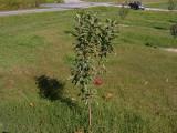 orchard0710110029.JPG