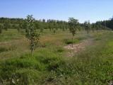 orchard0710110030.JPG