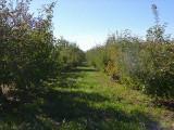 orchard0710110034.JPG